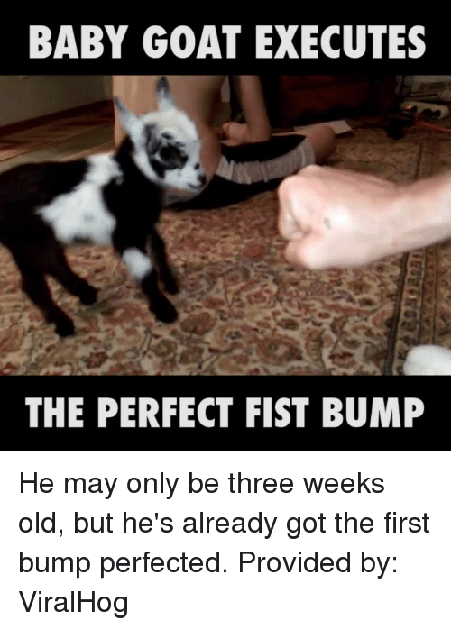 Fist Bumping: BABY GOAT EXECUTES  THE PERFECT FIST BUMP He may only be three weeks old, but he's already got the first bump perfected.   Provided by: ViralHog