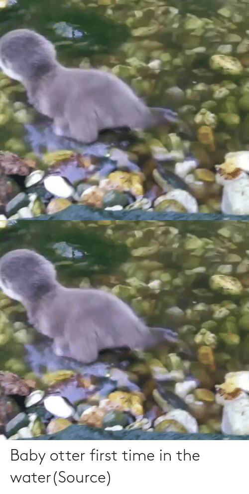 otter: Baby otter first time in the water(Source)