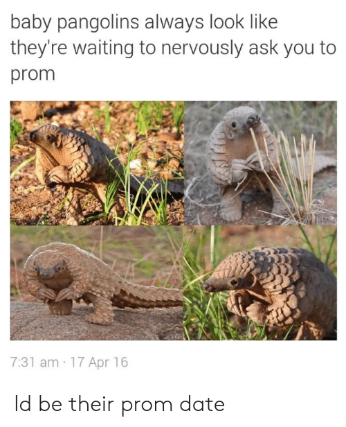 Nervously: baby pangolins always look like  they're waiting to nervously ask you to  prom  7:31 am 17 Apr 16 Id be their prom date