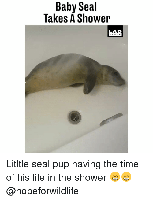 Life, Memes, and Shower: Baby Seal  Takes A Shower  LAD  BIBLE Litltle seal pup having the time of his life in the shower 😁😁 @hopeforwildlife