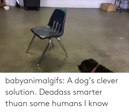 Dog: babyanimalgifs: A dog's clever solution.   Deadass smarter thuan some humans I know
