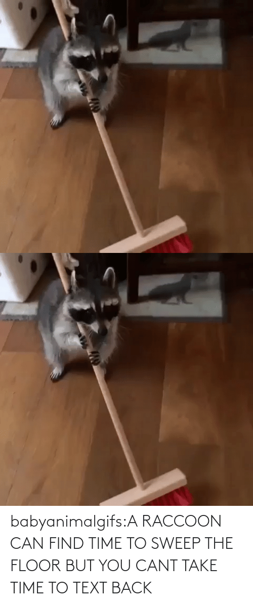 Text: babyanimalgifs:A RACCOON CAN FIND TIME TO SWEEP THE FLOOR BUT YOU CANT TAKE TIME TO TEXT BACK
