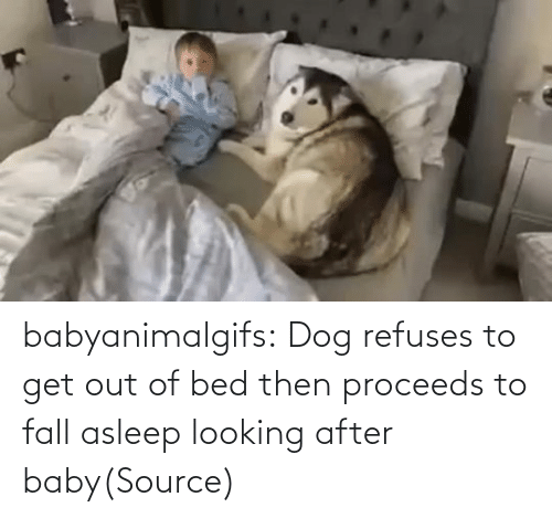 get out: babyanimalgifs:  Dog refuses to get out of bed then proceeds to fall asleep looking after baby(Source)