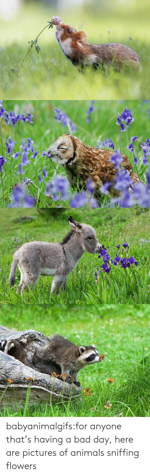 Thats: babyanimalgifs:for anyone that's having a bad day, here are pictures of animals sniffing flowers