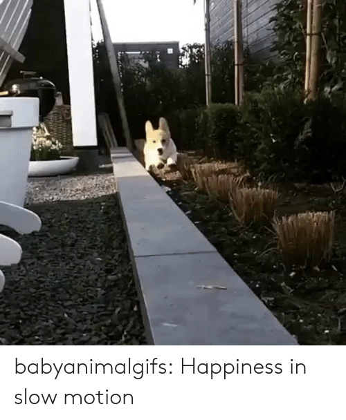 Slow Motion: babyanimalgifs: Happiness in slow motion