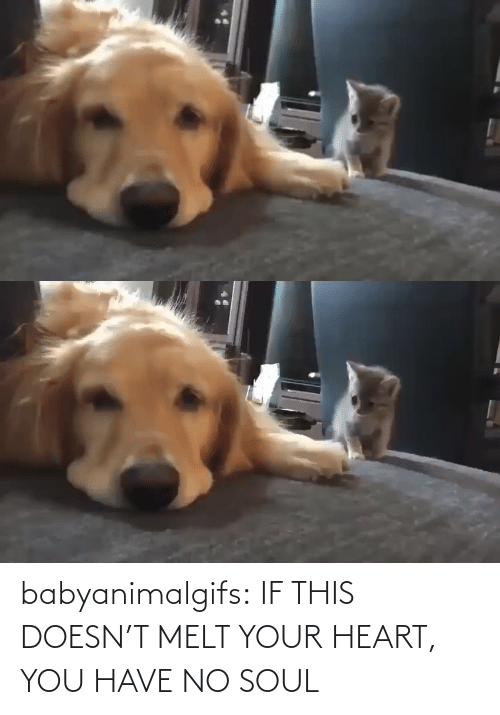 Doesn: babyanimalgifs:  IF THIS DOESN'T MELT YOUR HEART, YOU HAVE NO SOUL
