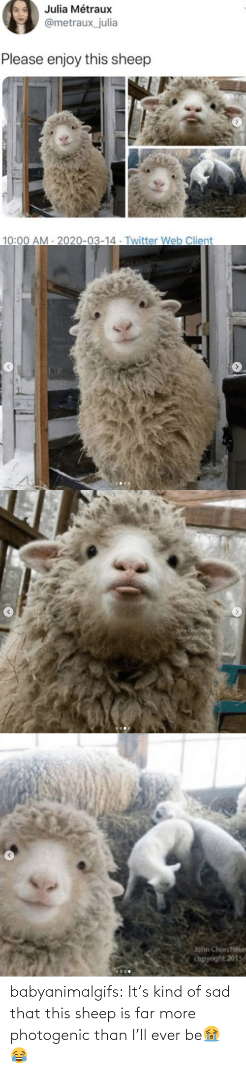 Far: babyanimalgifs:  It's kind of sad that this sheep is far more photogenic than I'll ever be😭😂