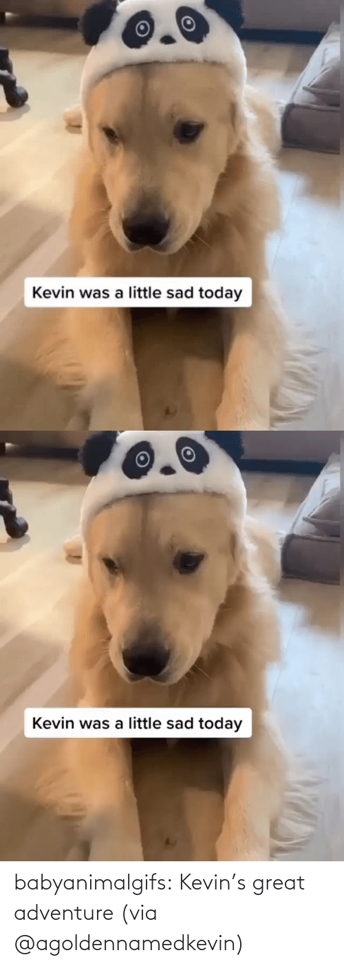 A Href: babyanimalgifs:  Kevin's great adventure (via @agoldennamedkevin)