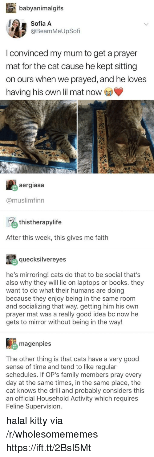laptops: babyanimalgifs  Sofia A  @BeamMeUpSofi  I convinced my mum to get a prayer  mat for the cat cause he kept sitting  on ours when we prayed, and he loves  having his own lil mat now  aergiaaa  @muslimfinn  thistherapylife  After this week, this gives me faith  quecksilvereyes  he's mirroring! cats do that to be social that's  also why they will lie on laptops or books. they  want to do what their humans are doing  because they enjoy being in the same room  and socializing that way. getting him his own  prayer mat was a really good idea bc now he  gets to mirror without being in the way!  magenpies  The other thing is that cats have a very good  sense of time and tend to like regular  schedules. If OP's family members pray every  day at the same times, in the same place, the  cat knows the drill and probably considers this  an official Household Activity which requires  Feline Supervision. halal kitty via /r/wholesomememes https://ift.tt/2BsI5Mt