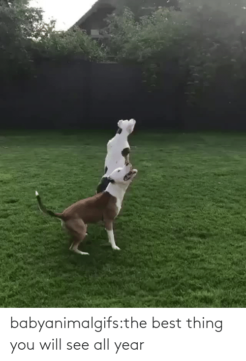 will: babyanimalgifs:the best thing you will see all year