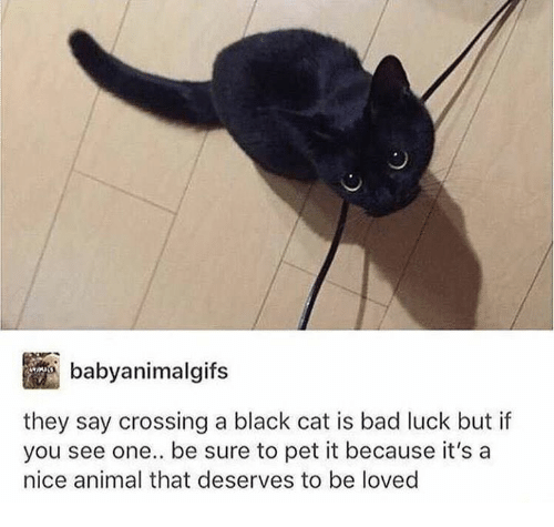 Bad, Dank, and Animal: babyanimalgifs  they say crossing a black cat is bad luck but if  you see one.. be sure to pet it because it's a  nice animal that deserves to be loved