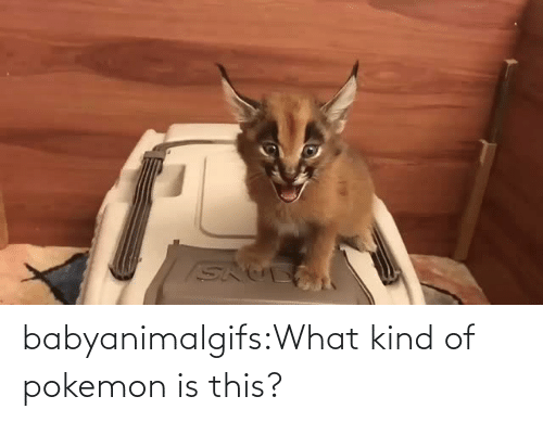 What Kind: babyanimalgifs:What kind of pokemon is this?