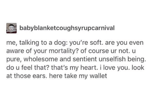 Lovee: babyblanketcoughsyrupcarnival  me, talking to a dog: you're soft. are you even  aware of your mortality? of course ur not. u  pure, wholesome and sentient unselfish being  do u feel that? that's my heart. i love you. look  at those ears. here take my wallet