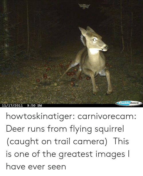 Deer, Tumblr, and Blog: bach  11/17/2011 9:50 PM howtoskinatiger:  carnivorecam:  Deer runs from flying squirrel (caught on trail camera)   This is one of the greatest images I have ever seen
