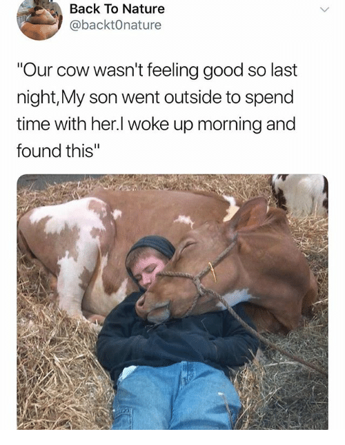 Memes, Good, and Nature: Back To Nature  @backtOnature  Our cow wasn't feeling good so last  night,My son went outside to spend  time with her.l woke up morning and  found this'""