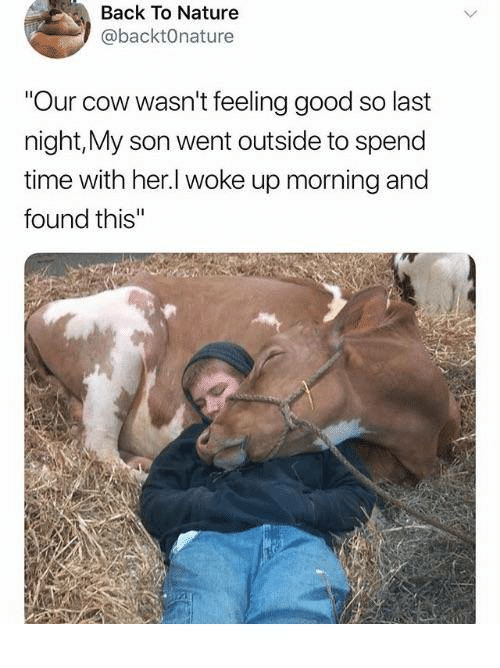 """Dank, Good, and Nature: Back To Nature  @backtOnature  Our cow wasn't feeling good so last  night,My son went outside to spend  time with her.l woke up morning and  found this"""""""