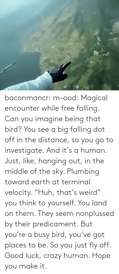 "Encounter: baconmancr:  m–ood: Magical encounter while free falling.  Can you imagine being that bird? You see a big falling dot off in the distance, so you go to investigate. And it's a human. Just, like, hanging out, in the middle of the sky. Plumbing toward earth at terminal velocity.  ""Huh, that's weird"" you think to yourself.  You land on them. They seem nonplussed by their predicament. But you're a busy bird, you've got places to be. So you just fly off. Good luck, crazy human. Hope you make it."
