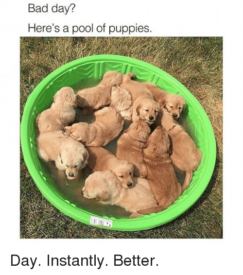 Bad, Bad Day, and Memes: Bad day?  Here's a pool of puppies. Day. Instantly. Better.