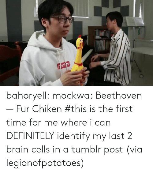 First Time: bahoryell:  mockwa: Beethoven — Fur Chiken #this is the first time for me where i can DEFINITELY identify my last 2 brain cells in a tumblr post (via legionofpotatoes)