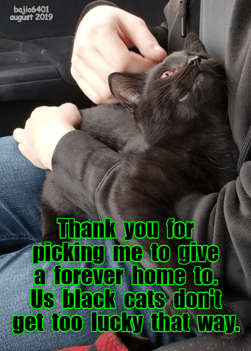 Cats, Thank You, and Black: bajio6401  august 2019  Thank you for  picking me to give  a forever home to.  Us black cats dont  get too lucky that way.