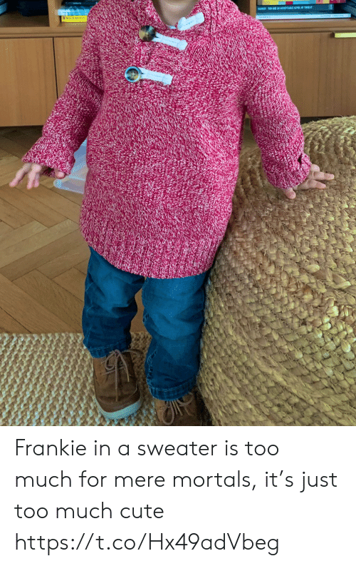 mere: BARESTTO ARE AR ACCEPTABLE LEVEL OF TIEA Frankie in a sweater is too much for mere mortals, it's just too much cute https://t.co/Hx49adVbeg