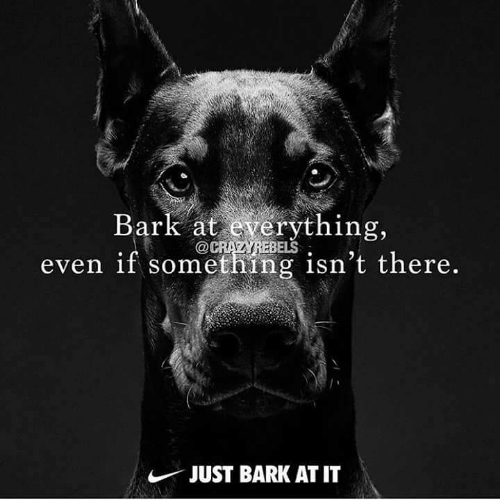 Just, Everything, and There: Bark at everything,  even if something isn't there.  BELS  JUST BARK AT IT
