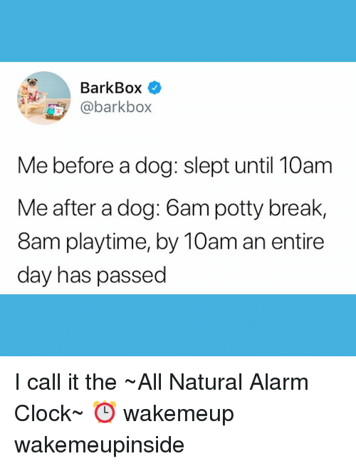 Clock, Memes, and Alarm: BarkBox  @barkbo>x  Me before a dog: slept until 10am  Me after a dog: 6am potty break,  8am playtime, by 10am an entire  day has passed I call it the ~All Natural Alarm Clock~ ⏰ wakemeup wakemeupinside