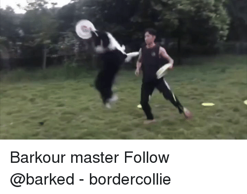Memes, 🤖, and Master: Barkour master Follow @barked - bordercollie