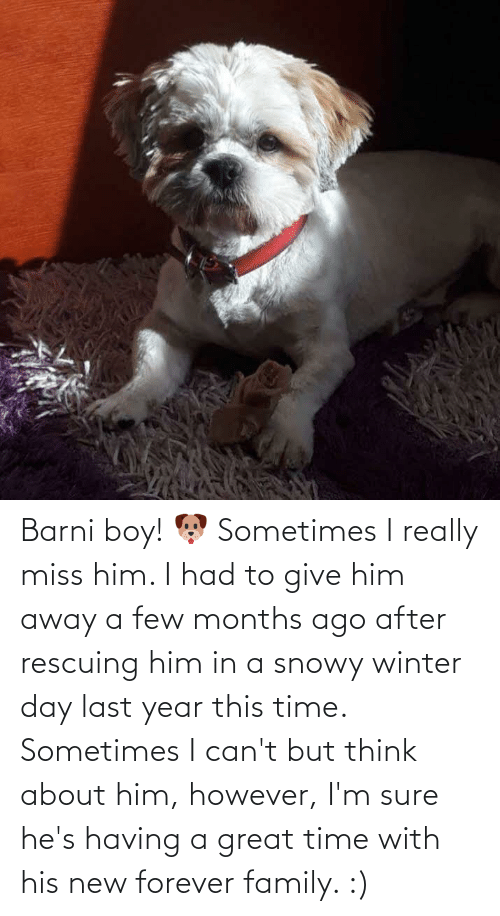 a-few-months: Barni boy! 🐶 Sometimes I really miss him. I had to give him away a few months ago after rescuing him in a snowy winter day last year this time. Sometimes I can't but think about him, however, I'm sure he's having a great time with his new forever family. :)