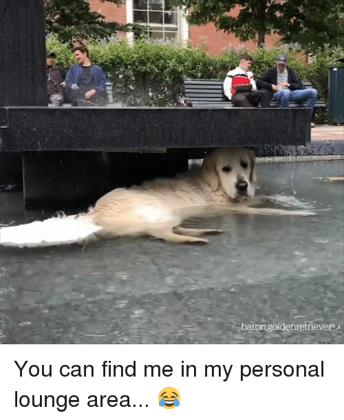 Personal, Can, and You: barongoldenretriever You can find me in my personal lounge area... 😂