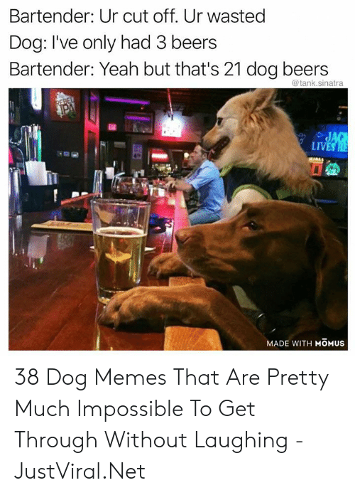 Get Through: Bartender: Ur cut off. Ur wasted  Dog: I've only had 3 beers  Bartender: Yeah but that's 21 dog beers  @tank.sinatra  REBEL  PA  EAT  JAG  LIVES HE  MADE WITH MOMUS 38 Dog Memes That Are Pretty Much Impossible To Get Through Without Laughing - JustViral.Net