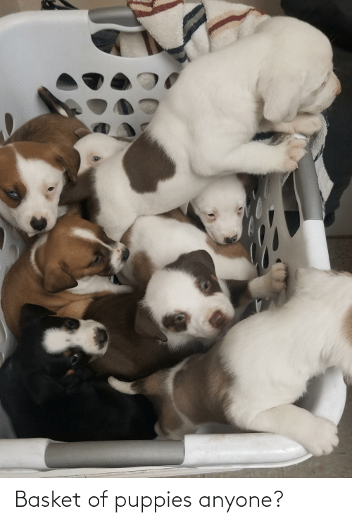 Aww Memes: Basket of puppies anyone?
