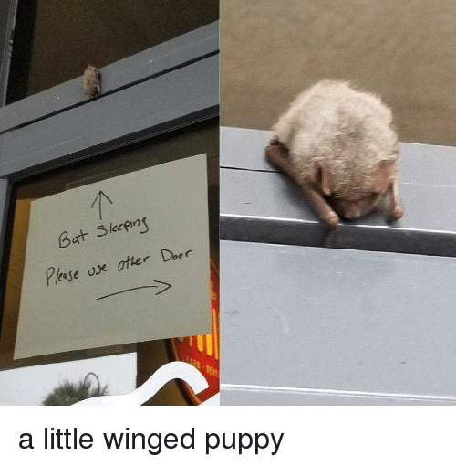 Memes, Puppy, and 🤖: Bat Skeping  Pese ose otter Door a little winged puppy
