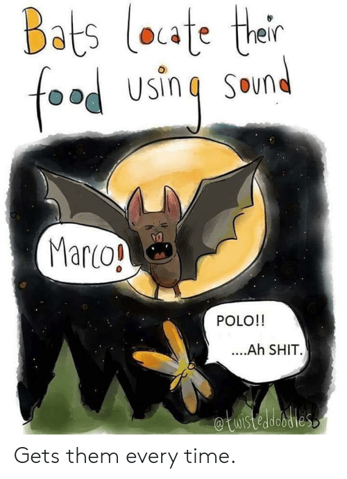 Polo, Time, and Marco Polo: Bats loate their  foad using Smnd  Marco!  POLO!!  ..Ah SHIT  etuistedesties Gets them every time.