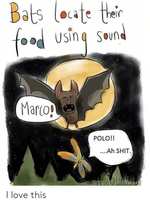 Food, Love, and Polo: Bats loate ther  food using  SOun  Marco!  POLO!!  ....Ah SHIT.  fuistedobdies I love this