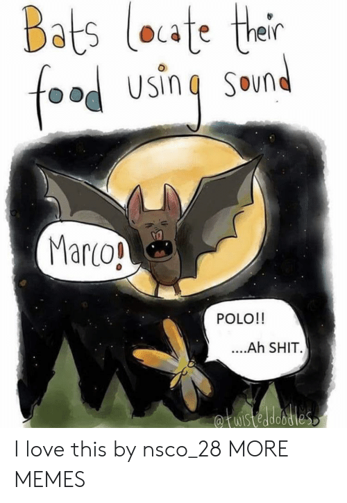 bats: Bats loate ther  food using  SOun  Marco!  POLO!!  ....Ah SHIT.  fuistedobdies I love this by nsco_28 MORE MEMES