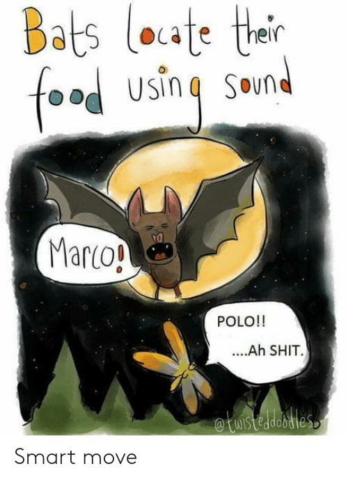 bats: Bats loute their  foa  Usin  SOund  Marco!  POLO!!  ....Ah SHIT  etuisteadoties Smart move
