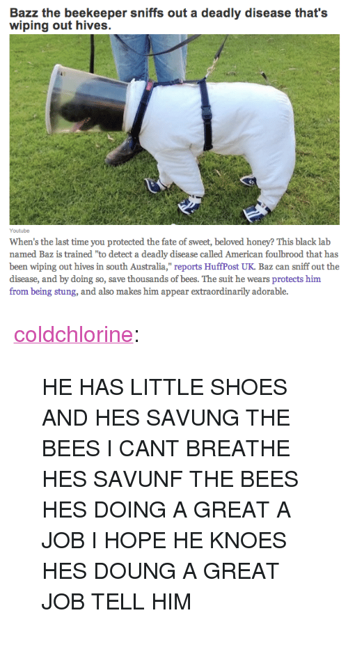 """Shoes, Tumblr, and youtube.com: Bazz the beekeeper sniffs out a deadly disease that's  wiping out hives.  Youtube  When's the last time you protected the fate of sweet, beloved honey? This black lab  named Baz is trained """"to detect a deadly disease called American foulbrood that has  been wiping out hives in south Australia,"""" reports HuffPost UK. Baz can sniff out the  disease, and by doing so, save thousands of bees. The suit he wears protects him  from being stung, and also makes him appear extraordinarily adorable. <p><a class=""""tumblr_blog"""" href=""""http://coldchlorine.tumblr.com/post/125814640754"""">coldchlorine</a>:</p> <blockquote> <p>HE HAS LITTLE SHOES AND HES SAVUNG THE BEES I CANT BREATHE HES SAVUNF THE BEES HES DOING A GREAT A JOB I HOPE HE KNOES HES DOUNG A GREAT JOB TELL HIM</p> </blockquote>"""