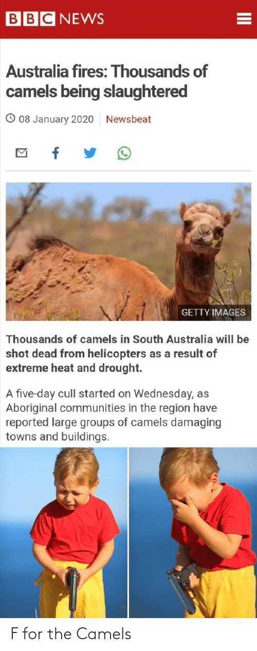Reported: BBC NEWS  Australia fires: Thousands of  camels being slaughtered  08 January 2020  Newsbeat  GETTY IMAGES  Thousands of camels in South Australia will be  shot dead from helicopters as a result of  extreme heat and drought.  A five-day cull started on Wednesday, as  Aboriginal communities in the region have  reported large groups of camels damaging  towns and buildings. F for the Camels
