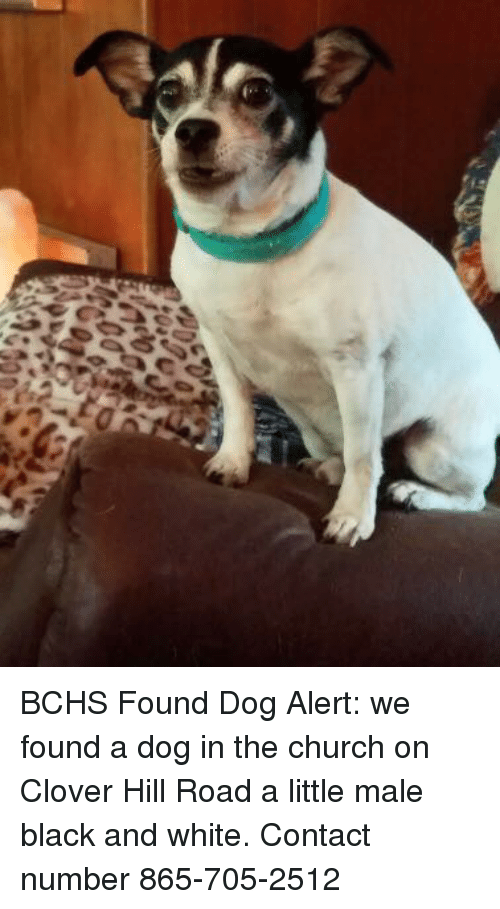 Church, Memes, and Black: BCHS Found Dog Alert:  we found a dog in the church on Clover Hill Road a little male black and white. Contact number 865-705-2512