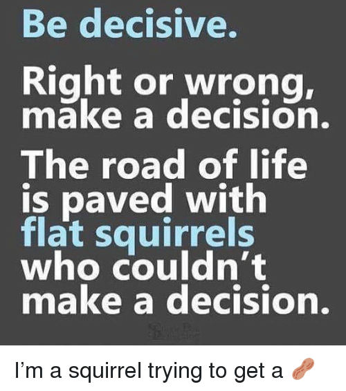 Life, Memes, and Squirrel: Be decisive.  Right or wrong,  make a decision.  The road of life  is paved with  flat squirrels  who couldn't  make a decision. I'm a squirrel trying to get a 🥜