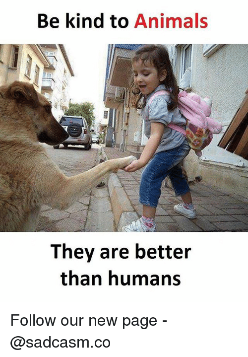 Animals, Memes, and 🤖: Be kind to Animals  They are better  than humans Follow our new page - @sadcasm.co