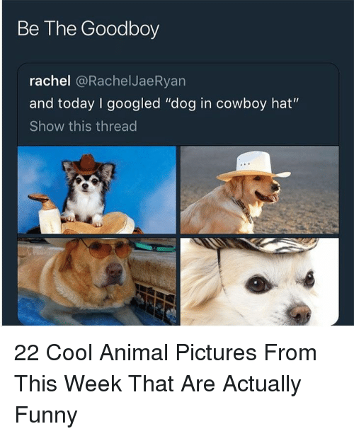 "Funny, Animal, and Cool: Be The Goodboy  rachel @RachelJaeRyan  and today I googled ""dog in cowboy hat""  Show this thread 22 Cool Animal Pictures From This Week That Are Actually Funny"