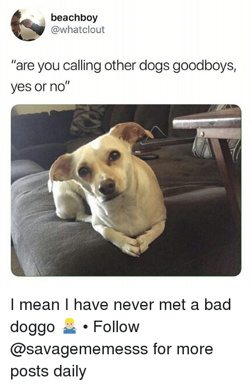 """Bad, Dogs, and Memes: beachboy  @whatclout  """"are you calling other dogs goodboys,  yes or no'"""" I mean I have never met a bad doggo 🤷🏼♂️ • Follow @savagememesss for more posts daily"""