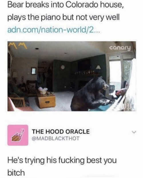 Bitch, Fucking, and The Hood: Bear breaks into Colorado house,  plays the piano but not very well  adn.com/nation-world/2...  canary  THE HOOD ORACLE  @MADBLACKTHOT  He's trying his fucking best you  bitch