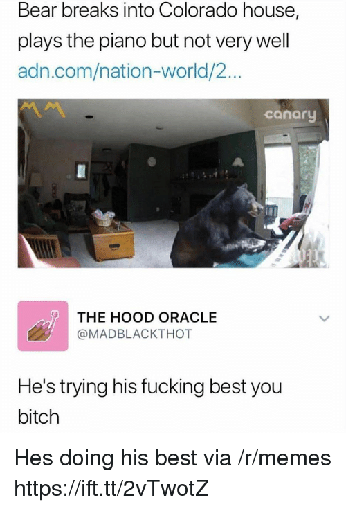 Bitch, Fucking, and Memes: Bear breaks into Colorado house,  plays the piano but not very well  adn.com/nation-world/2...  canary  THE HOOD ORACLE  @MADBLACKTHOT  He's trying his fucking best you  bitch Hes doing his best via /r/memes https://ift.tt/2vTwotZ