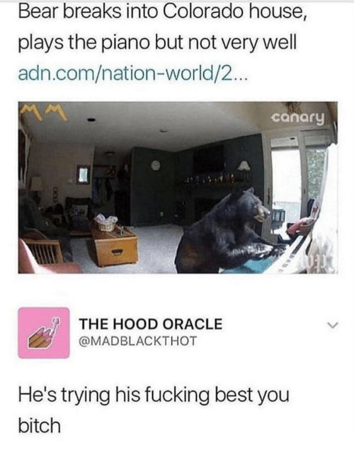 Bitch, Fucking, and The Hood: Bear breaks into Colorado house,  plays the piano but not very well  adn.com/nation-world/2...  conory  THE HOOD ORACLE  @MADBLACKTHOT  He's trying his fucking best you  bitch