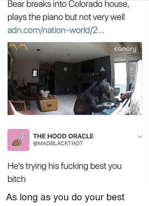 Bitch, Fucking, and The Hood: Bear breaks into Colorado house,  plays the piano but not very well  adn.com/nation-world/2...  canary  THE HOOD ORACLE  @MADBLACKTHOT  He's trying his fucking best you  bitch As long as you do your best