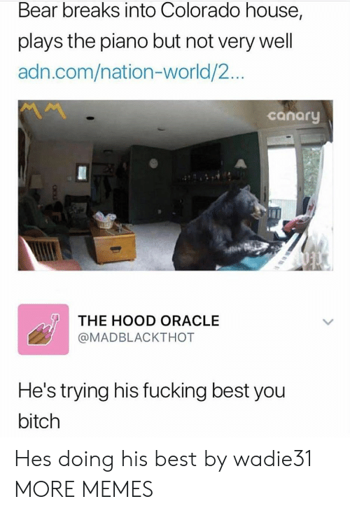 canary: Bear breaks into Colorado house,  plays the piano but not very well  adn.com/nation-world/2...  canary  THE HOOD ORACLE  @MADBLACKTHOT  He's trying his fucking best you  bitch Hes doing his best by wadie31 MORE MEMES