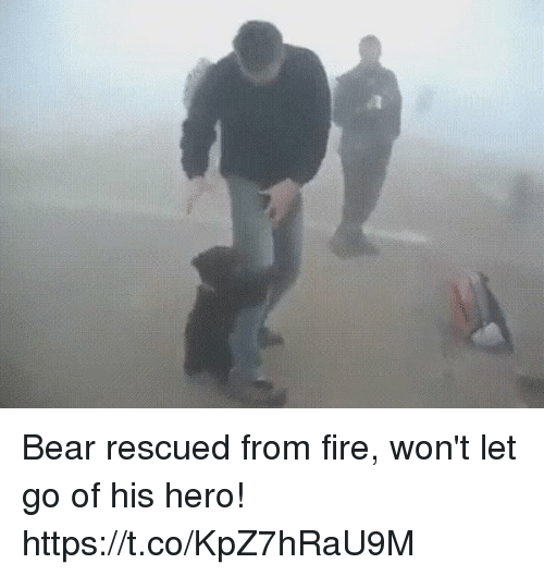 bearings: Bear rescued from fire, won't let go of his hero! https://t.co/KpZ7hRaU9M